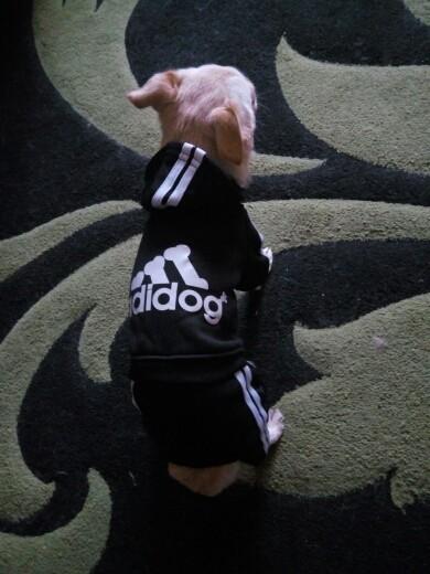 Jumpsuite Adidog Zwart
