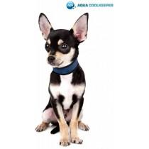 Chihuahua Aqua Coolkeeper Pasific Blue XXS